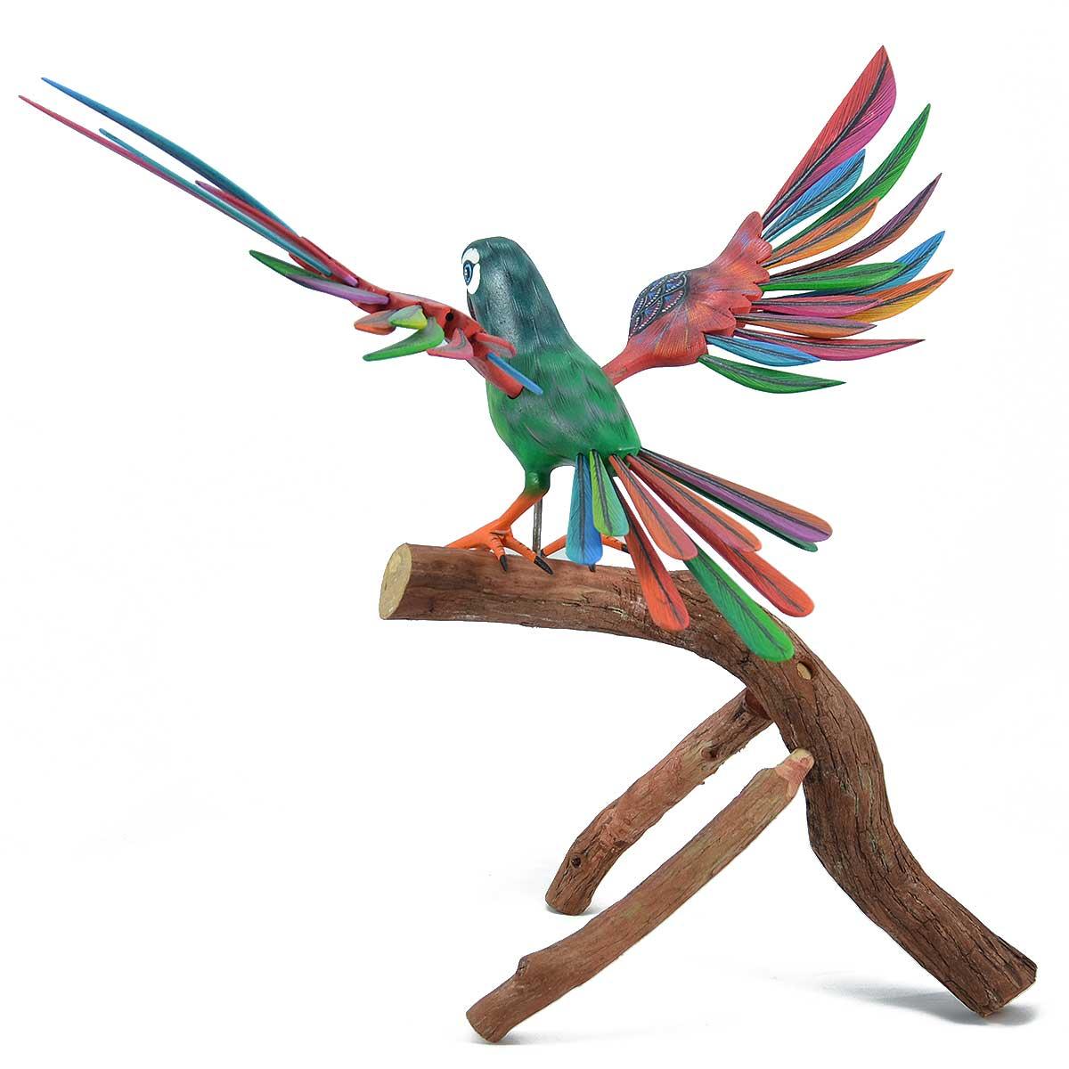 Agustín Cruz Tinoco Agustín Cruz Tinoco: Parrot Birds