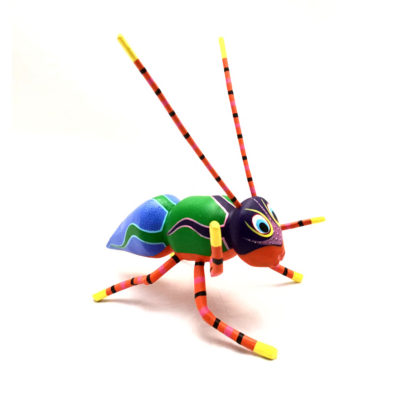 Leticia Mendoza Leticia Mendoza: Ant ants